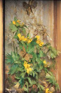 Jane Hall boterbloemen - Handwerkwereld