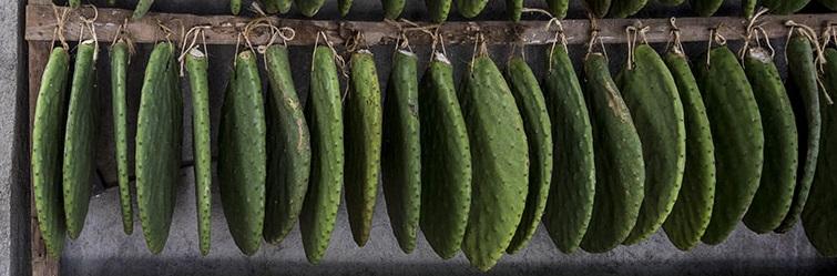 De opuntia of vijgcactus waar de cochenilleluis op leeft - Handwerkwereld